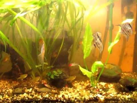 mon aquarium r 233 cup 233 rant d une d algues brunes