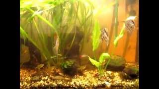Mon aquarium récupérant d'une invasion d'algues brunes
