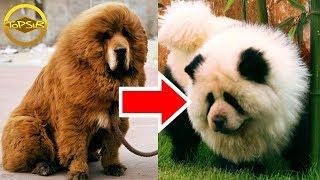 10 สุนัขสายพันธุ์ที่สวย สง่างาม และหายากที่สุดในโลก