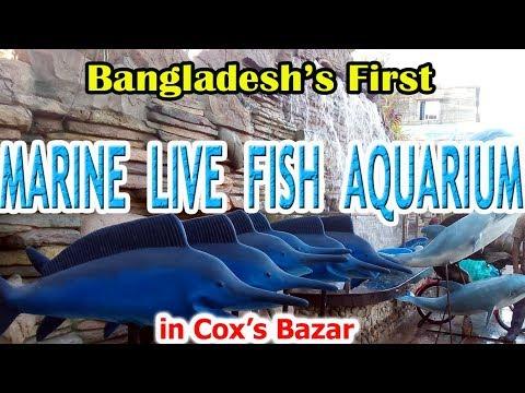 The First Marine Or Sea Fish Aquarium Complex of Bangladesh In Sea Beach Cox's Bazar   go COXSBAZAR