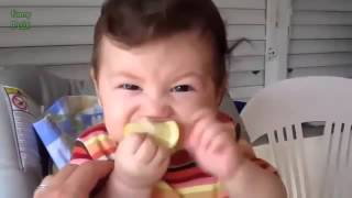 Babies Eating Lemons for the First Time Compilation 2014   TubeUnblock