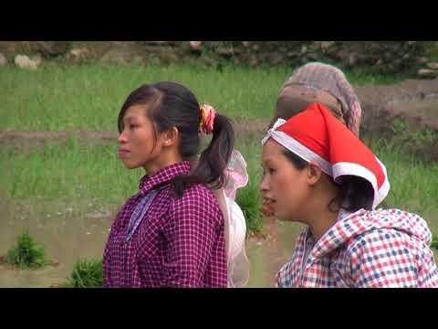Vidéo Une semaine parmi les H'mongs