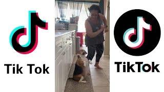 Dog Dancing to Reggaeton Goes Viral ~ Funniest Puppies on TIKTOK