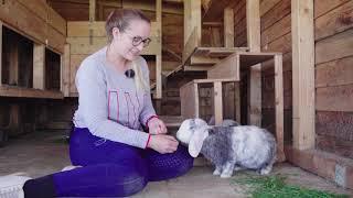 Ich zeige euch meine Kaninchen und wie sie leben!