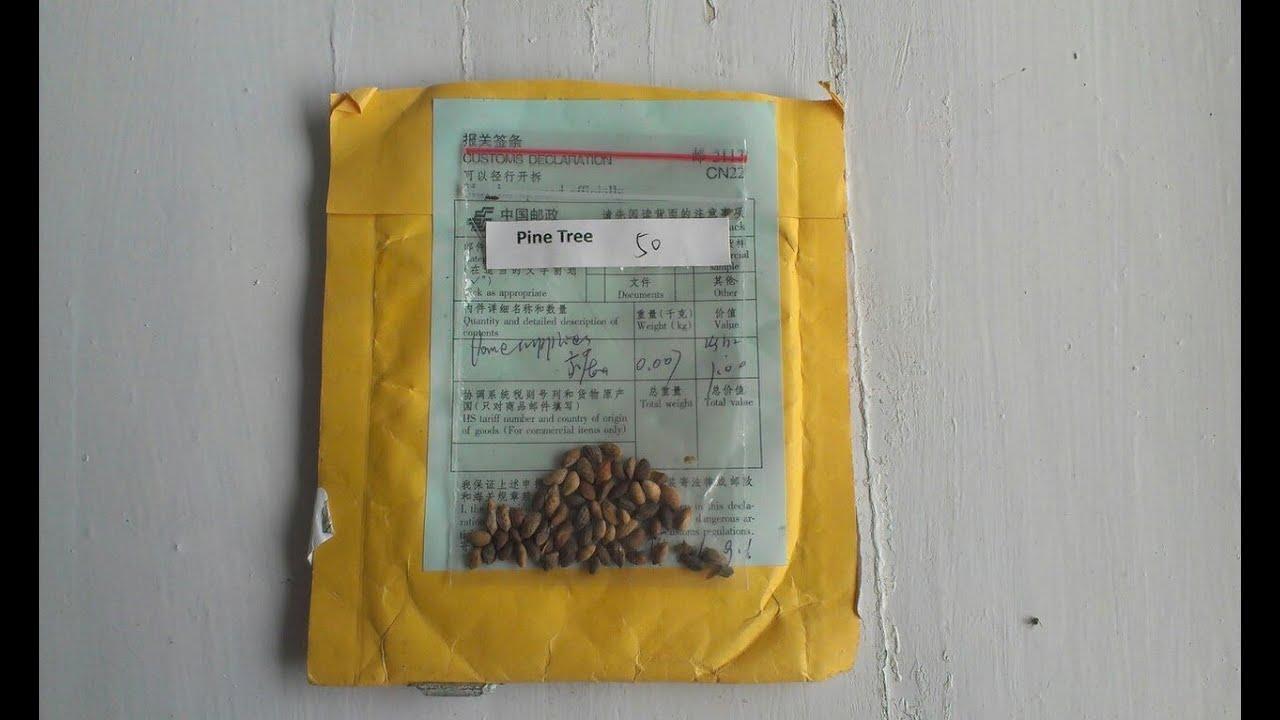 Как вырастить бонсай в домашних условиях из семян: уход
