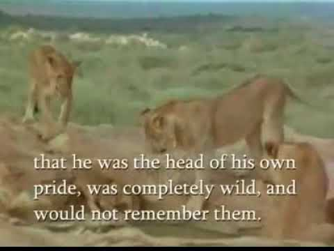 Home Raised Lion Remembers The Love Give And Returns The Love After Reunion  With The Keeper One Yea