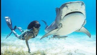 Cette fille est la meilleure amie des requins (Shark Girl) - ZAPPING SAUVAGE