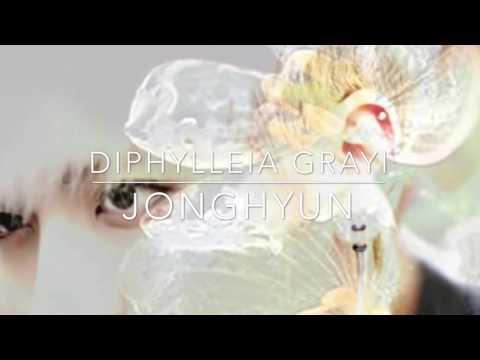 (3D Audio) JONGHYUN (정현) – DIPHYLLEIA GRAYI (산하엽)/ SKELETON FLOWER - [Please Use Headphones]