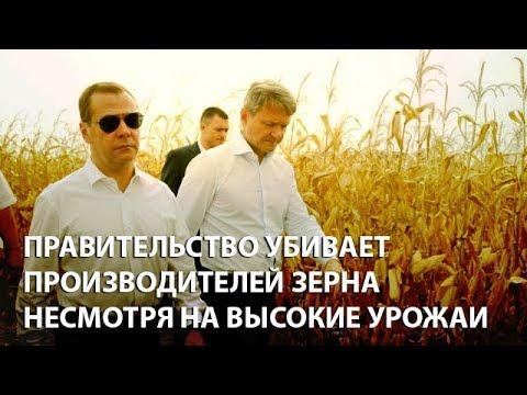 Правительство убивает производителей зерна несмотря на высокие урожаи