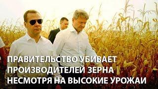 видео На российском рынке зерна продолжается падение цен