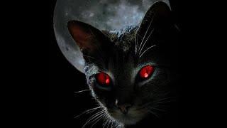 Коты Х Подборка смешного видео с кошками для хорошего настроения