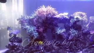 Морской аквариум. Аквариум на заказ. Морские и солоноводные рыбки.
