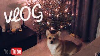 VLOG: Привезли ЕЛКУ\Что будет, если собаке дать гигантскую морковку!,