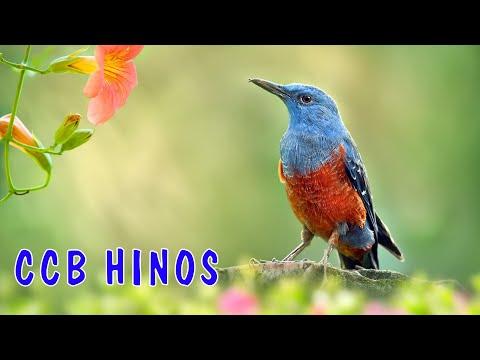 ccb-hinos-2020-música-favorita-do-hino-melhores-músicas-de-hinos