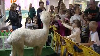 Костромской цирк устроил маленьким зрителям квест по закулисью