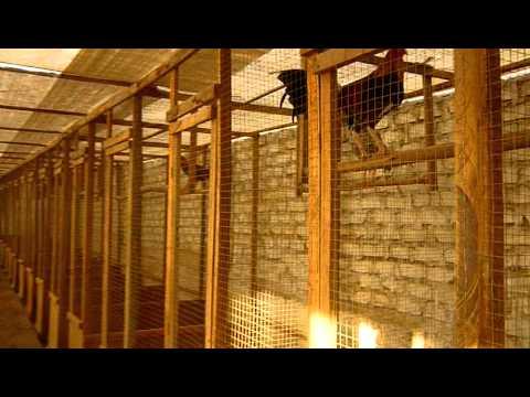 Criadero de gallos de pelea galpon stefano 2010 2011 2 for Como hacer un criadero de cachamas