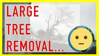 Tree Removal Service w/ Average Cost Prices For Trees + Stump Limb Removing - Time Lapse | MySuLonE