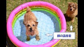 とりあえず今日は「水遊びを怖がらないこと」目標。 次回は「水遊び楽し...