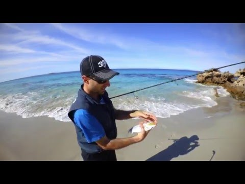 Surf Salmon on Soft Plastics - SHIMANO AUSTRALIA