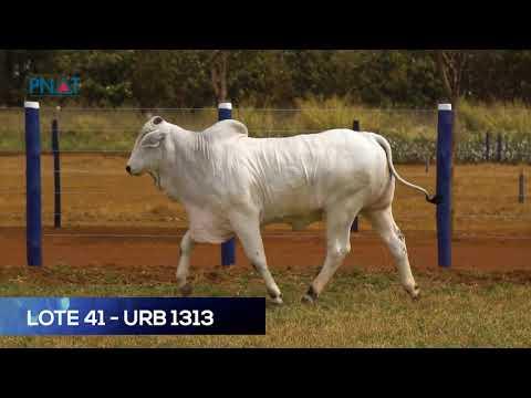LOTE 41 - URB1313 - NELORE