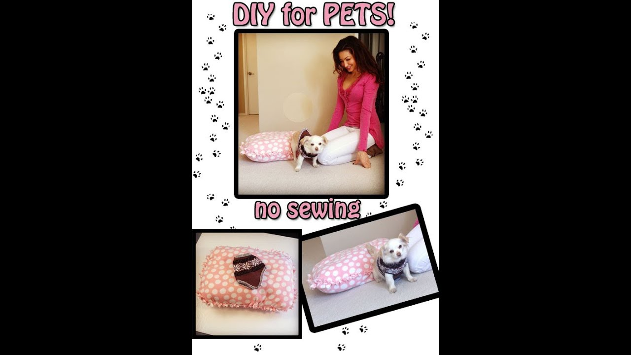 DIY guide to making a pet sweater and pet bed! NO SEWING - YouTube