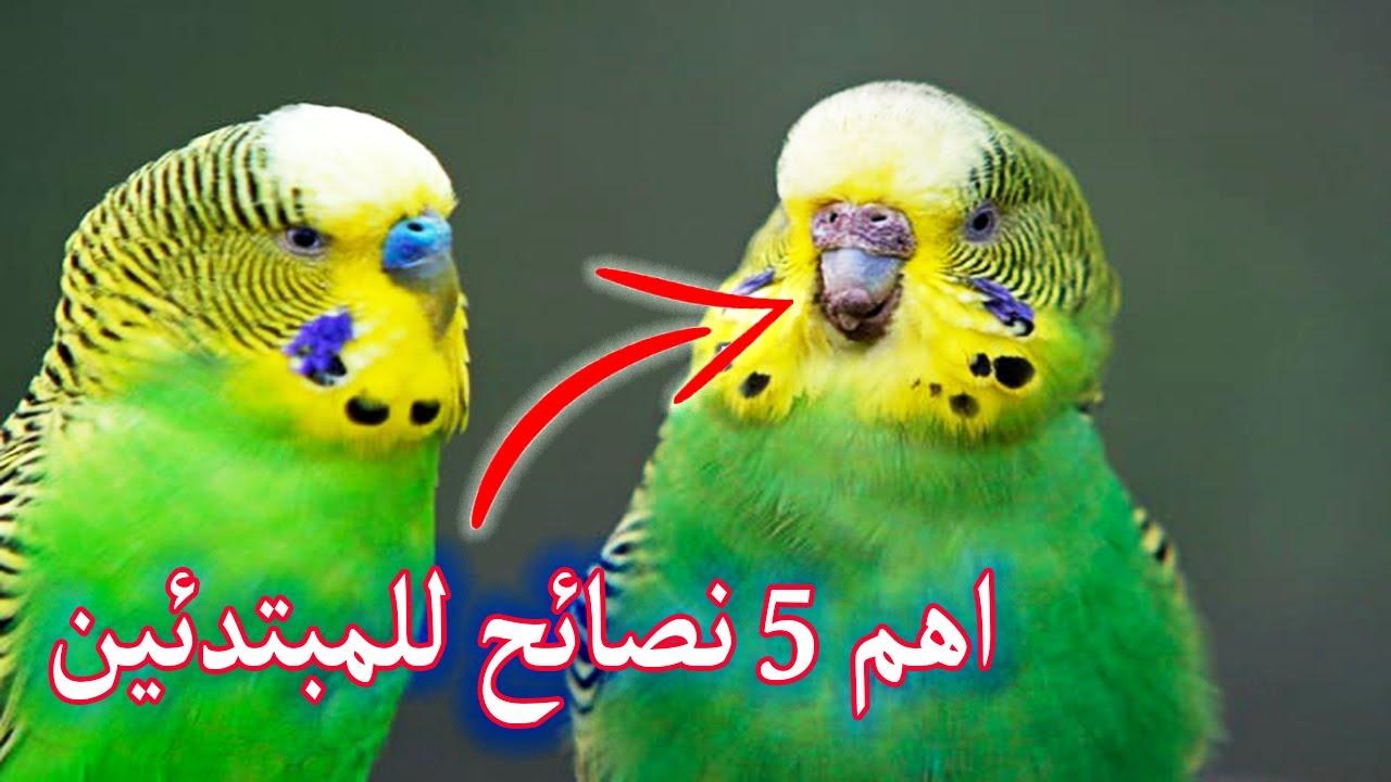 ⚠️ اهم خمس نصائح للمبتدئين اول م تشتري عصافير(مهم جداا)