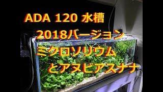 ADA120CM 水槽 2018春バージョン  ミクロソリウムとアヌビアスナナ