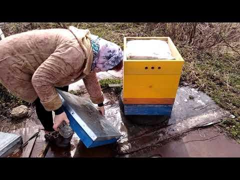 Вирусные эпидемии пчел в Подмосковье.
