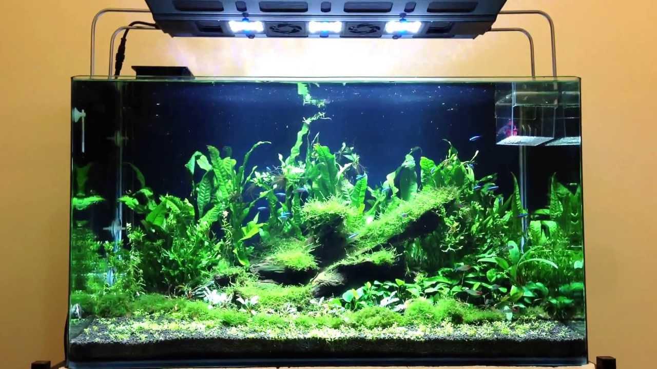 3ft Planted Tank with Maxspect Razor LED 8000k & 3ft Planted Tank with Maxspect Razor LED 8000k - YouTube