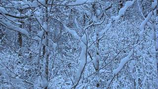Relaxing nature scenes & chinese instrumental music - In The Forest In Winter Season [Part II]
