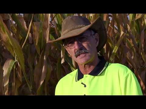 IAN HAMONO TALKS ABOUT GROWING PIONEER® CORN HYBRIDS