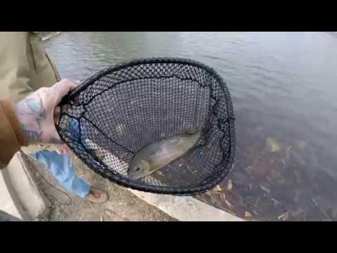 Urban Trout Fishing Missouri