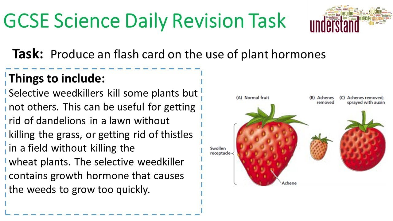 GCSE Science Daily Revision Task 129 - YouTube