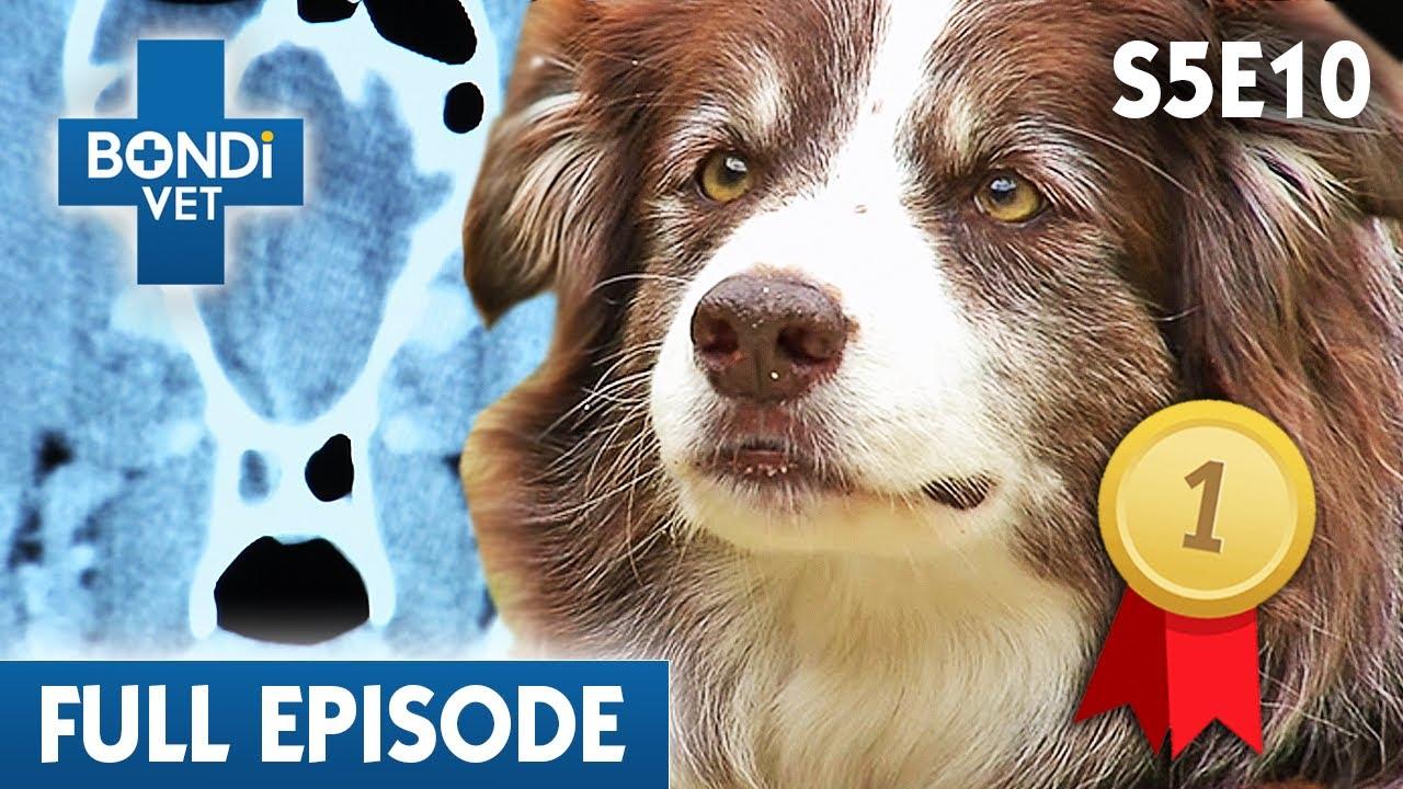 Download 🐷 Picking A Piglet Forever | FULL EPISODE | S05E10 | Bondi Vet