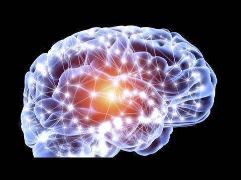 La neuro-génèse : le développement du cerveau de A à Z