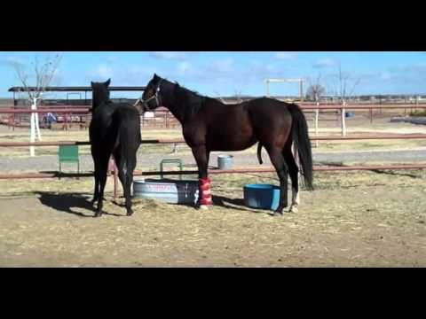 HORSE BREEDING - PART 2 - NATURAL- BREEDING HORSE - HORSE ...