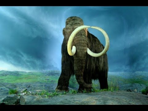 The Return of the Woolly Mammoth?