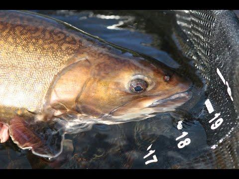Eagle River Brook Trout | Labrador