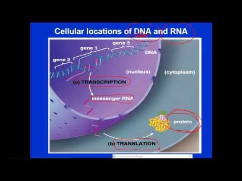 Molecular Biology - dr. Jehad  --  Introduction