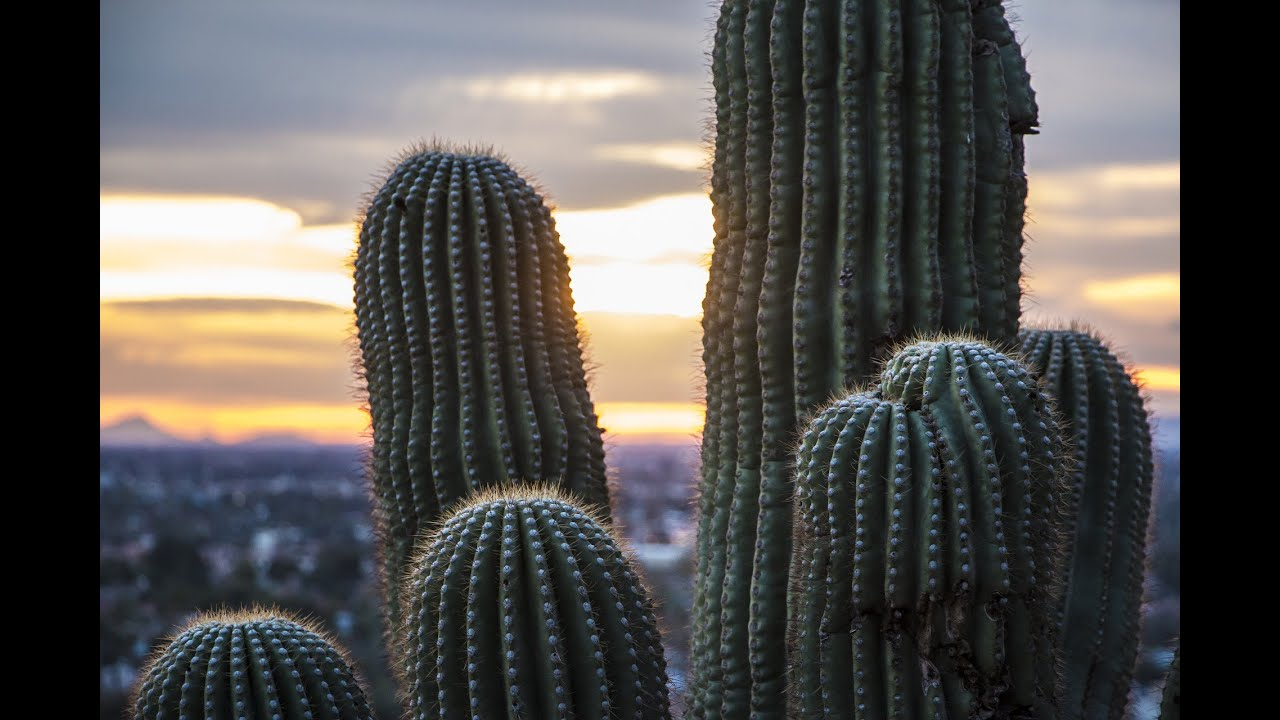 5 Tips For Selling Your Vacant Land In Tucson