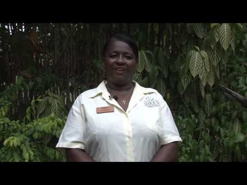 Jakes Hotel Treasure Beach Jamaica - Intro