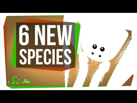 6 of the Coolest New Species Discovered in the Last Year