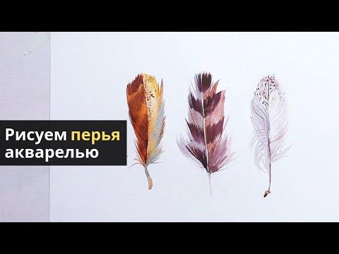 Вопрос: У каких птиц чёрная грудка и бело-серая раскраска (перья) – см.фото?
