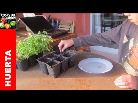 Como cultivar perejil en casa - Pequeña guía de cultivo - 1