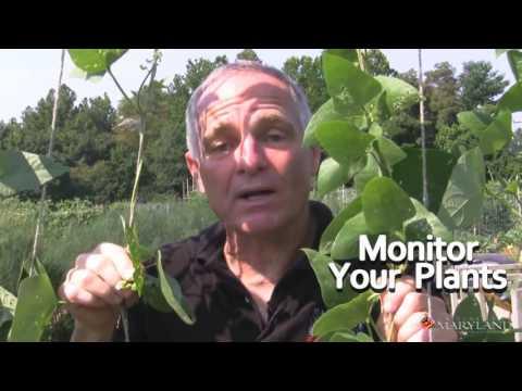 Integrated Pest Management IPM Basics