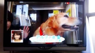 富田林にいる名物犬のアルファがテレビ出演!