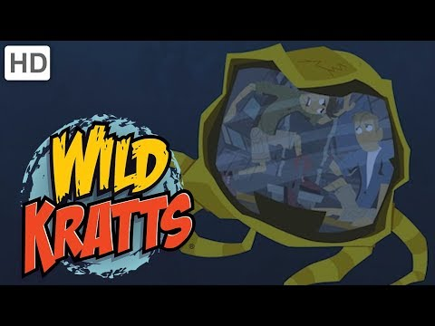 Wild Kratts - Swimming with Marine Mammals