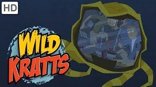 Wild Kratts - Swimming with Marine Mammals