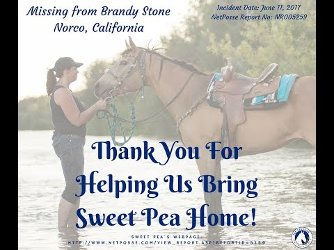 Stolen Horse International aka NetPosse™ - Sweet Pea's Recovery Party