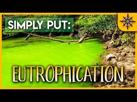 Eutrophication Explained